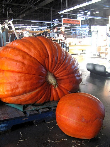 One of the famous Dill family's monstrous pumpkins at the Halifax Seaport Farmers Market