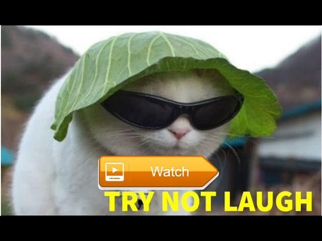 Try Not To Laugh DONT WATCH Top Funny Cats And Dogs THE BEST FUNNY Video Dogs and Cats  Try Not To Laugh DONT WATCH Top Funny Cats And Dogs THE BEST FUNNY Video Dogs and Cats Try Not To Laugh cats videos sexy cats sexy  on Pet Lovers