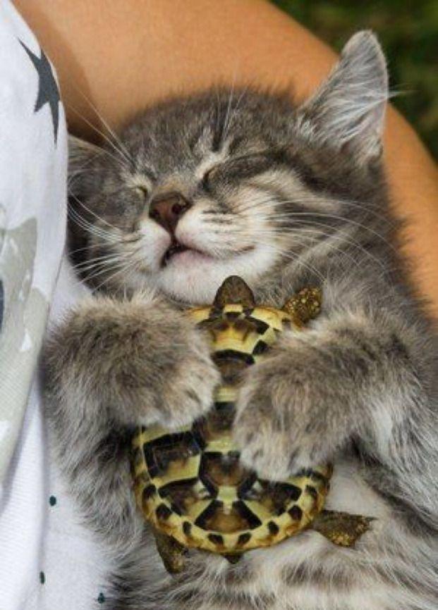 """""""I love my turtle"""""""