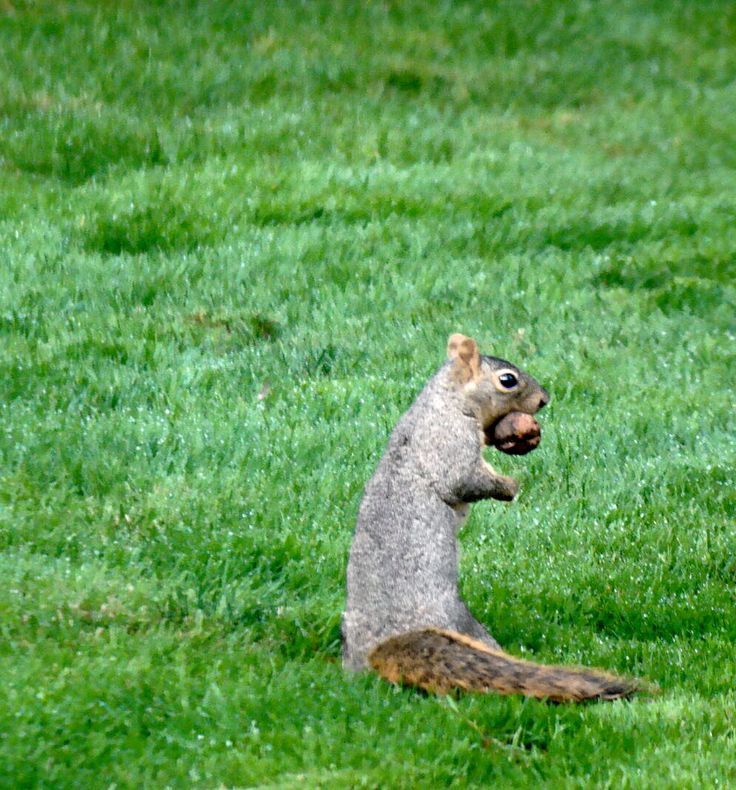 17 Best Images About Back Yard Squirrels And Birds On