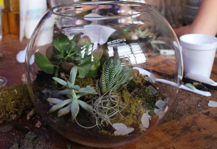 73 best the workshops i teach images on pinterest for How to keep succulents alive indoors