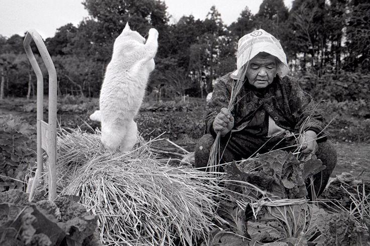 Les tendres clichés d'un chat et son humaine, témoins de leur amour éternel - Société - Wamiz