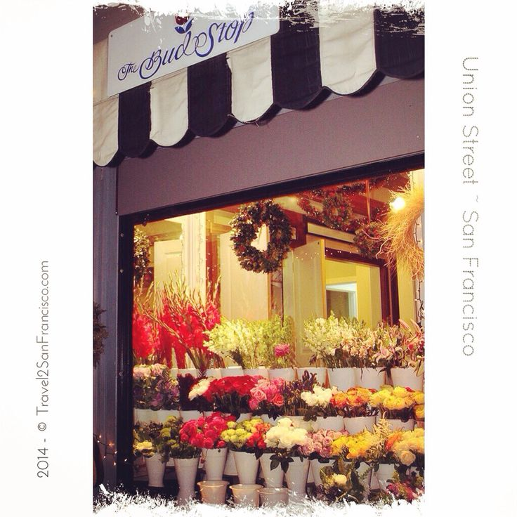 The flower shop @UnionStreetSF that will caught everyone's attention in Marina/Cow Hollow neighborhood, @TheBudStop 2200 Union St San Francisco _________________________________ Visit our site & blog at { www.Travel2SanFrancisco.com }  _________________________________ #instadaily #instahub #igers #igerssf #iphonesia #picoftheday #vsco #vscocam #travelgram #travel2sanfrancisco #sanfrancisco  #bayarea #cowhollow #unionstreetSF #flowershop
