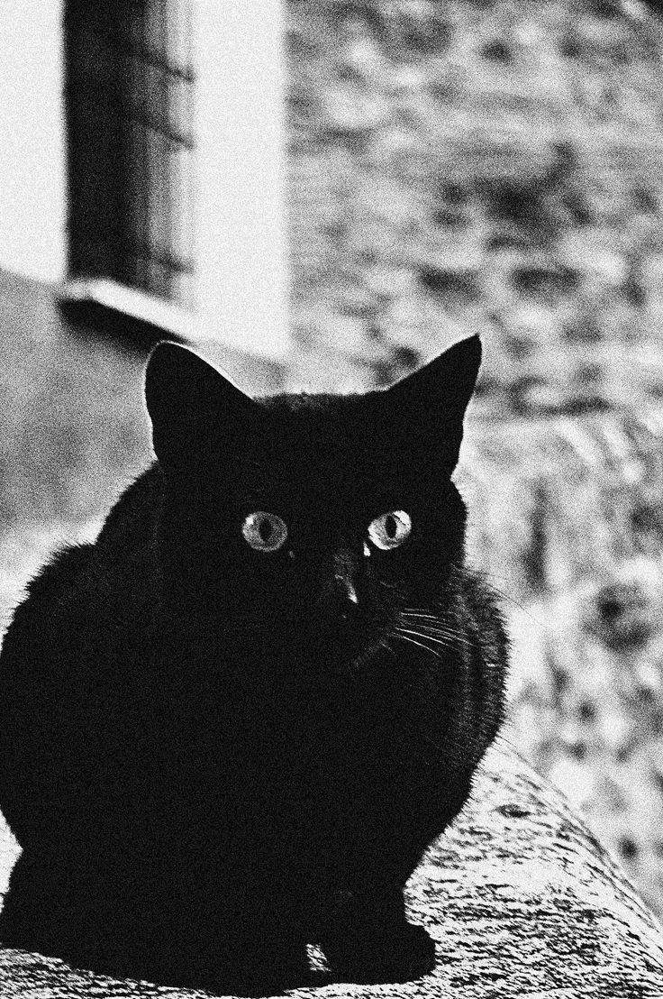 https://flic.kr/p/dfwhfB | Gato negro