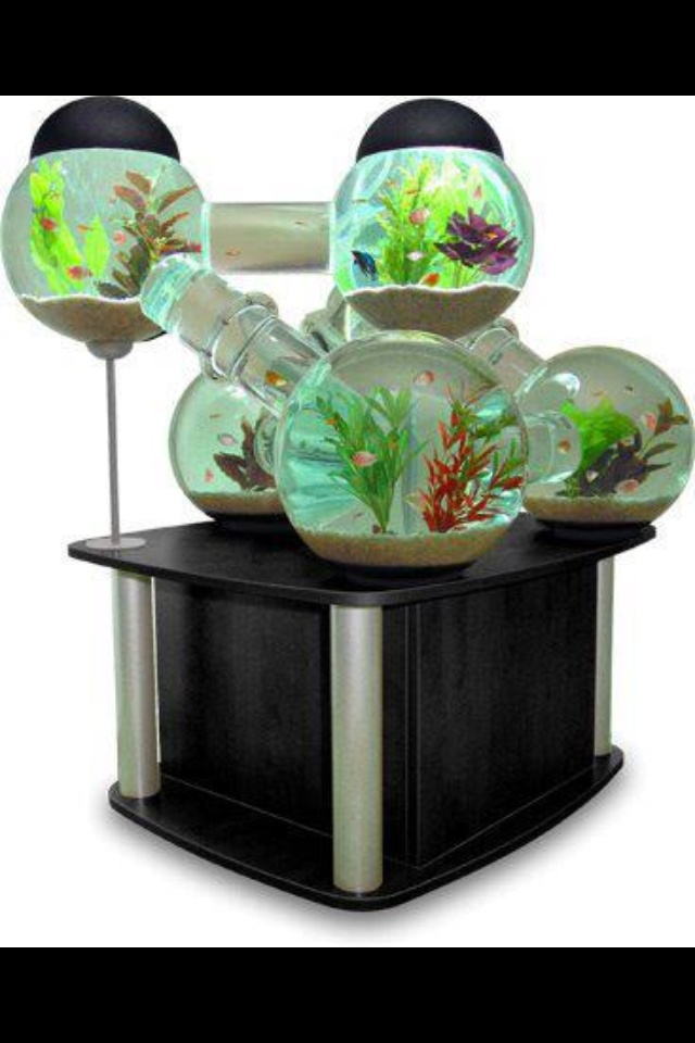51 best old fish tank ideas images on pinterest fish for Cool pet fish