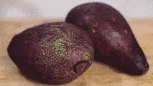 Congelamento de abacate