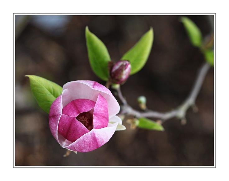 Foto květiny