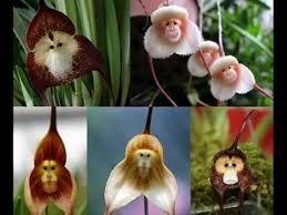 Resultado de imagen para nombre de flores exoticas