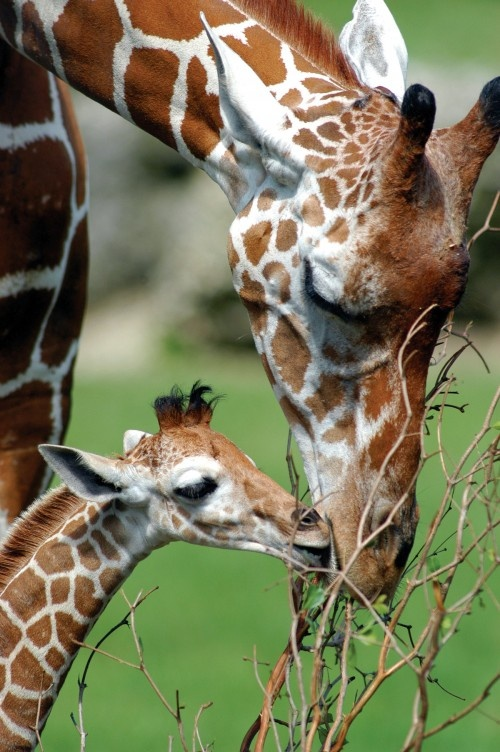 204 best images about Baby wild animals in South Africa ...