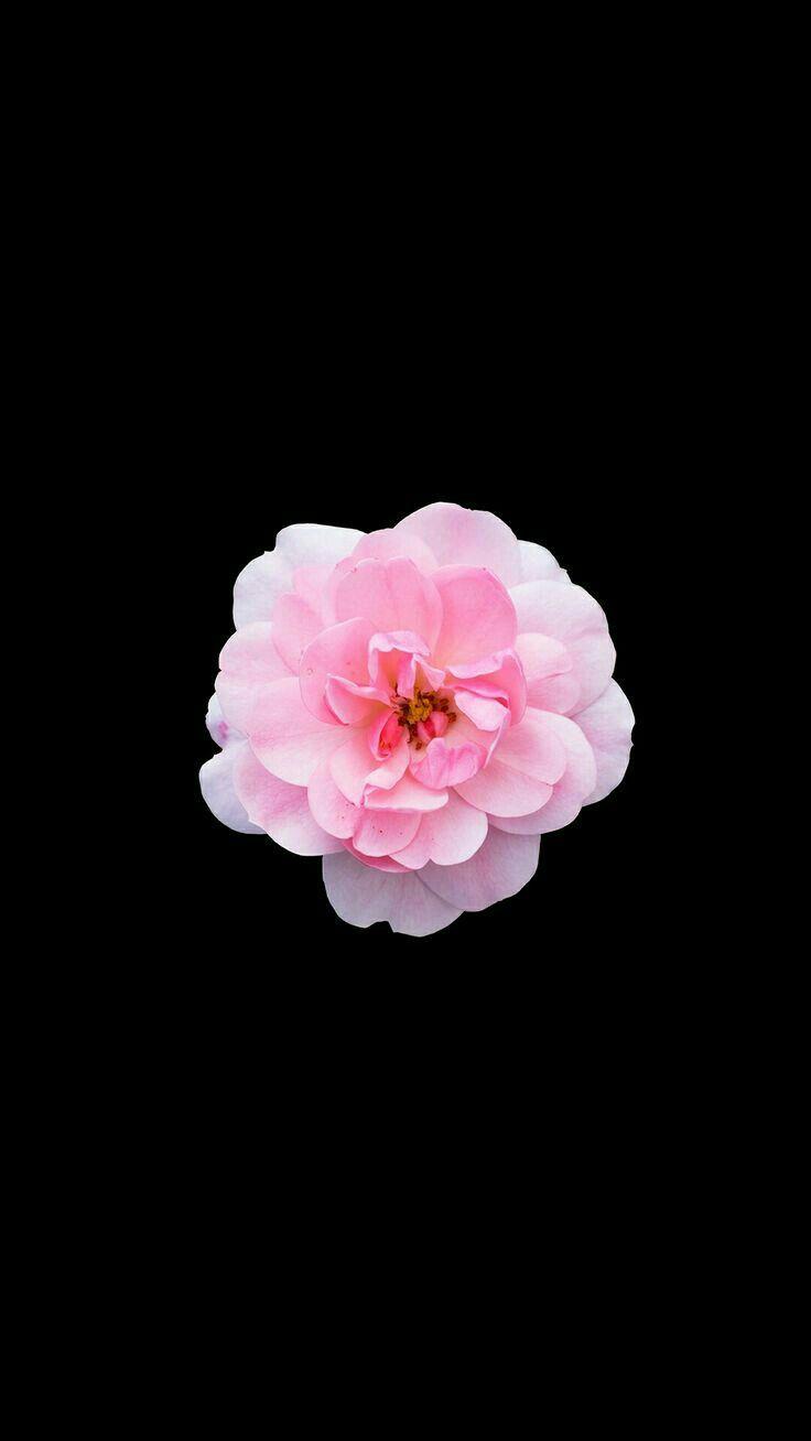 Картинки как на айфоне цветок
