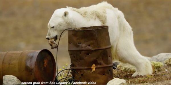 Defend Starving Polar Bears – Save the Arctic Refuge  The heartbreaking viral video shows the dire situation of polar bears as sea ice disappears. Protect their habitat and fight climate change now. (22570 signatures on petition)