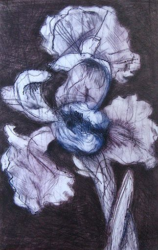 WILLIAM KENTRIDGE   (South African, b. 1955) White Iris, 1998 etching in color 2013 © William Kentridge