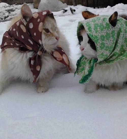 "* * CAT ON LEFT: "" Whens yoo getz here froms Poland?"" -----------------            [2ND CAT: "" Onlys two months ago; me alreadys lost meez green card.""  [1ST CAT: Bawzhe'! Yoo betters high tails it down to de American Embassy. BTW, me likes yer babushka."""