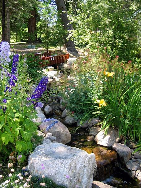 Plantas para estanques de jardin gallery of bombas para for Bombas estanques jardin