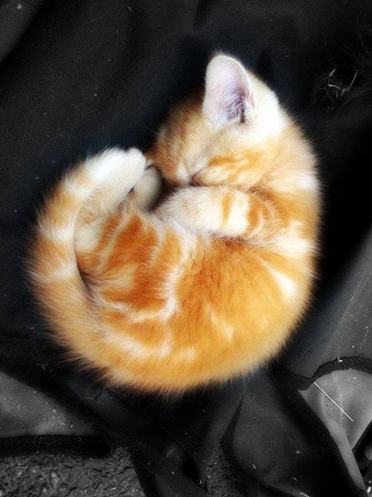 Curled up and comfortable