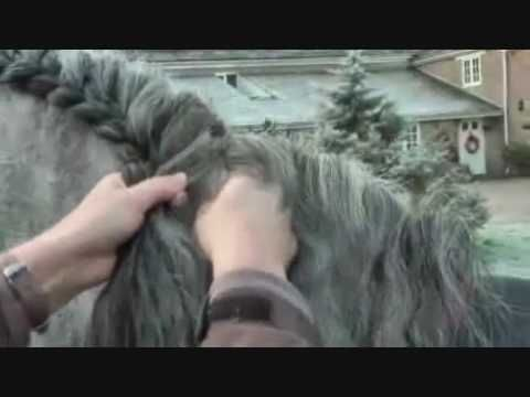 Dressage rider, Hannah Biggs, demonstrates how to correctly braid a Spanish stallion's mane for competition. However, she points out that on a daily basis she just divides Torri's mane into long plaits to keep it out of the reins. Hannah has instructions from his owners not to trim or pull his mane at all, so Torri is shown here in all his glory...
