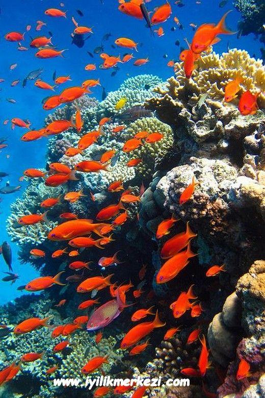 Günün Olumlaması: Denizde çok balık var. Çok fazla imkan, bir sürü müşteri, dolu dolu fırsatlar var. Hepimize yetecek kadar bol bol sevgi , güven ve iyilik var. Görüyor, farkediyor ve hayatıma katıyorum. Biliyorum , güvendeyim ... — Iyilik'te.12112015 #somuchfish #properity #bolluk #bereket #farkındalık