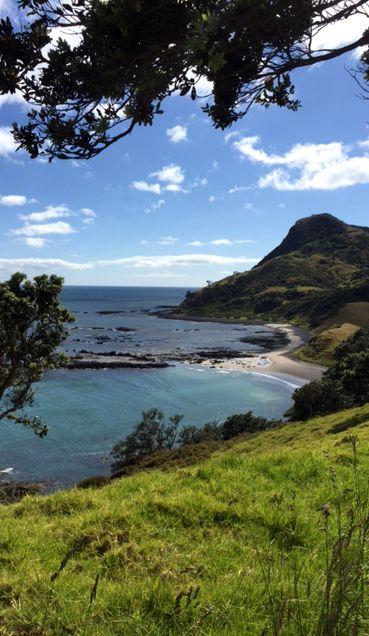 Fletcher Bay, Nordinsel, Neuseeland - Wanderung auf der Coromandel
