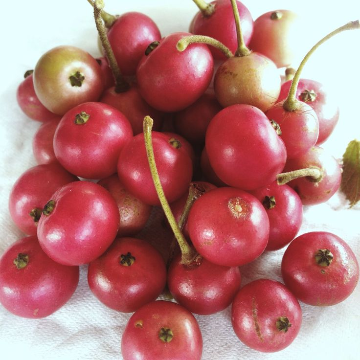 Another kind of cherry..