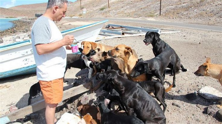 This Couple Found 34 Stray Animals While On Vacation. What They Did Will Melt