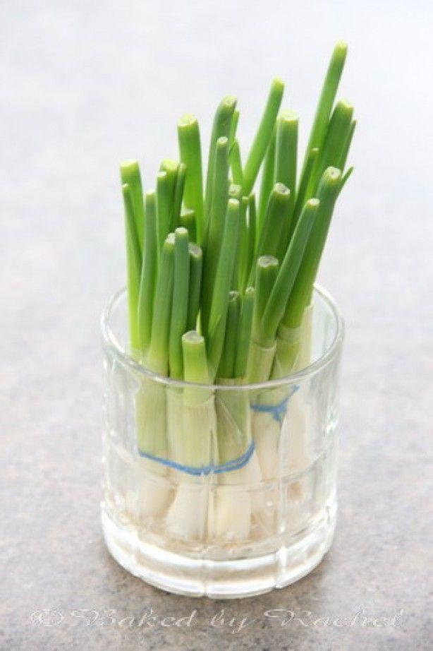 Handige tip: zelf lente-uien kweken - Lekker en Simpel