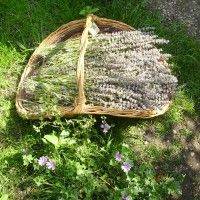 20 Plantes Sauvages Comestibles