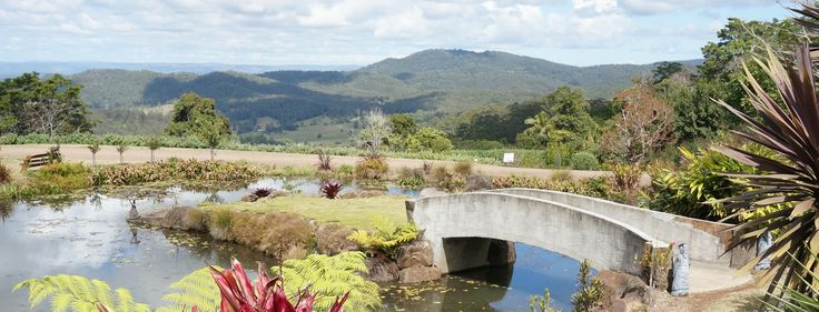 Come and join us on a #Rainforest Tour on the #SunshineCoast #QLD or join us to the magnificent #MalenyBotanicGardens