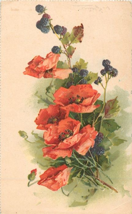 POPPIES AND BLACKBERRIES