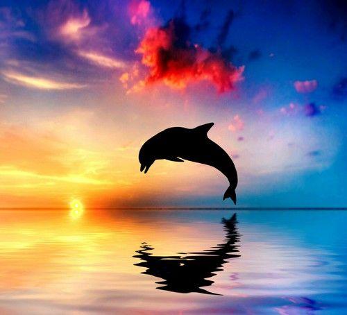 Dolphin-Jump-Rainbow-Color-Sea-Ocean-Creatures-Animal-Shiwi