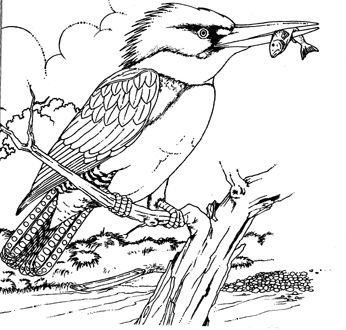 Realistic And Detailed Kingfisher Bird Coloring Pages For Adults