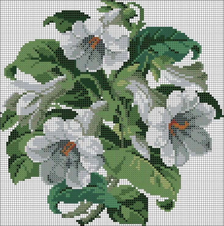 Beyaz Çan Çiçekleri