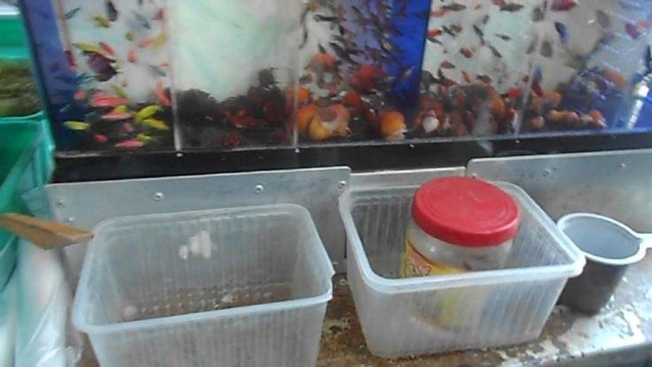 Покупка рыбок