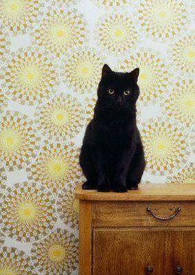 Black cat - looks just like my beloved Gorilla <3