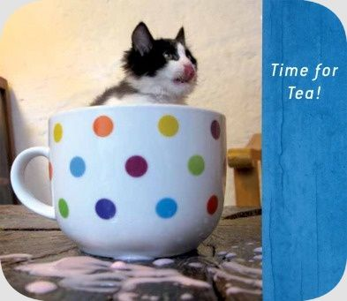 Time for tea! | @FairMail - Fair Trade Cards - Fair Trade Cards - Valentine's Day - S336-E | Animals, Friendship, Heart, Love, Cat, Kitten, Tea cup