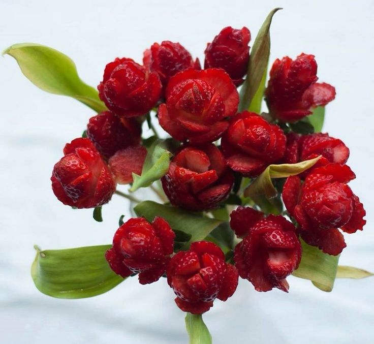 Jordbær roser