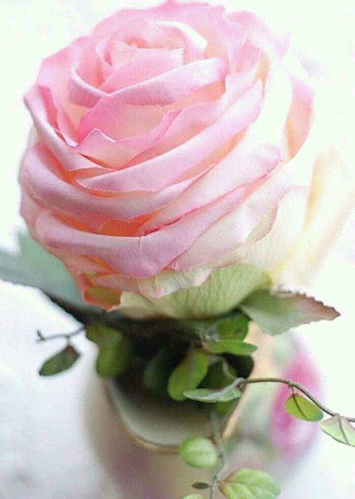 Resultado de imagen de imagenes de rosas rosas hermosas