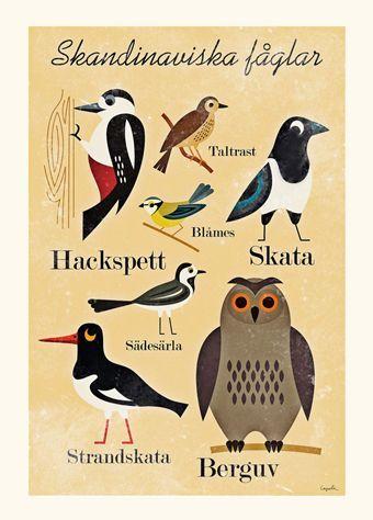 nordiske fugle