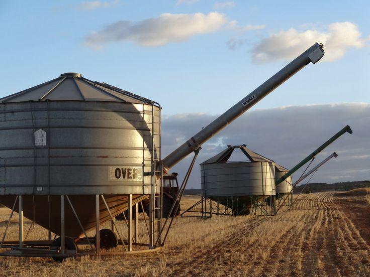 Field bins at dusk