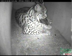 Webcams para ver animales en directo