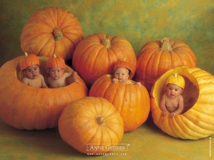 De Prachtige babyfoto's van Anne Geddes.. - Plazilla.com