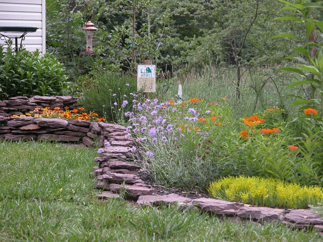 backyard habitat backyard aesthetic pinterest