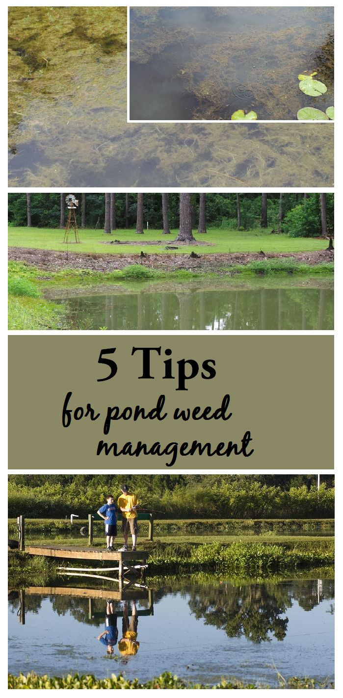 Weeds can transform a pond from a source of enjoyment to a source of frustration. Utilizing a logical, systematic approach to aquatic weed management can greatly increase your likelihood of success! #pond #weeds #management #yard #garden #lawn #aquatic