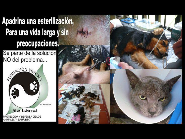 Apadrina la esterilización de un amigo sin casa, ayuda a disminuir la población de perros callejeros y gatos silvestres.  INFO: 864 8485 --- 311 803 12 94