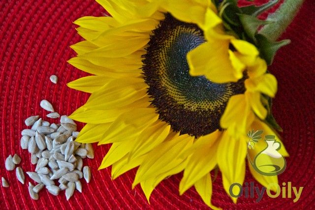 5 Sunflower Oil Substitutes