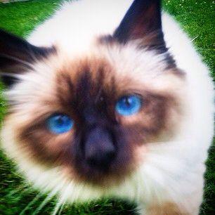 Blue eyes felix