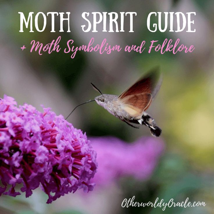 The moth spirit guide brings lessons of self-exploration ...