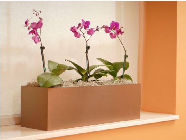 Vista Rectangle with Orchids