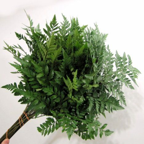 How to Make a Wedding Bouquet - Greening in with Leather Leaf Fern