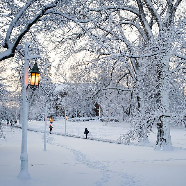 The snowy campus of Michigan State University.