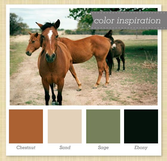 Chestnut, Sand, Sage and Ebony Color Palette 11 by Sarah Hearts